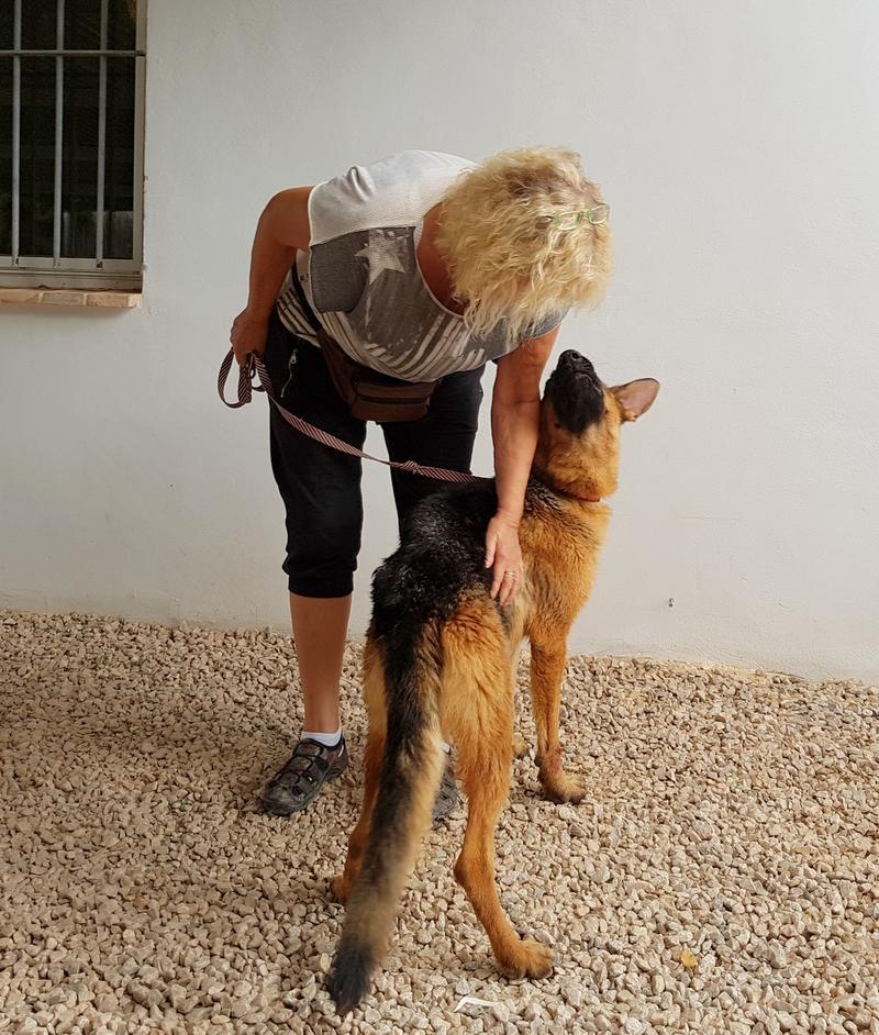 Bildertagebuch- Flopsy, eine ganz liebe sensible Hundedame die immer trauriger wurde und abmagerte, sie hatte sich aufgegeben ... VERMITTELT! 30752607ug