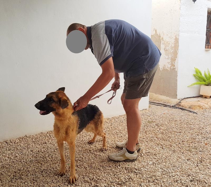 Bildertagebuch- Flopsy, eine ganz liebe sensible Hundedame die immer trauriger wurde und abmagerte, sie hatte sich aufgegeben ... VERMITTELT! 30752608zv