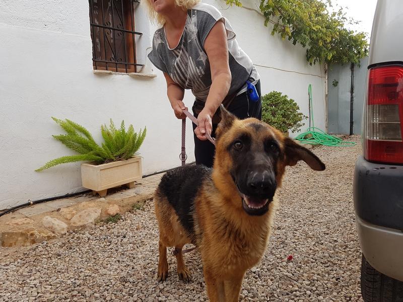 Bildertagebuch- Flopsy, eine ganz liebe sensible Hundedame die immer trauriger wurde und abmagerte, sie hatte sich aufgegeben ... VERMITTELT! 30752609ic