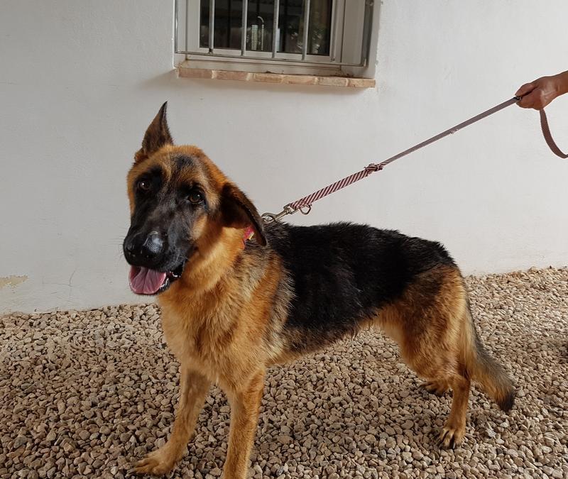 Bildertagebuch- Flopsy, eine ganz liebe sensible Hundedame die immer trauriger wurde und abmagerte, sie hatte sich aufgegeben ... VERMITTELT! 30752610gg