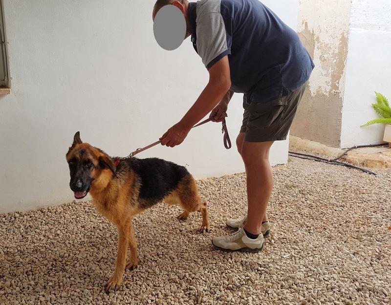 Bildertagebuch- Flopsy, eine ganz liebe sensible Hundedame die immer trauriger wurde und abmagerte, sie hatte sich aufgegeben ... VERMITTELT! 30752611dg