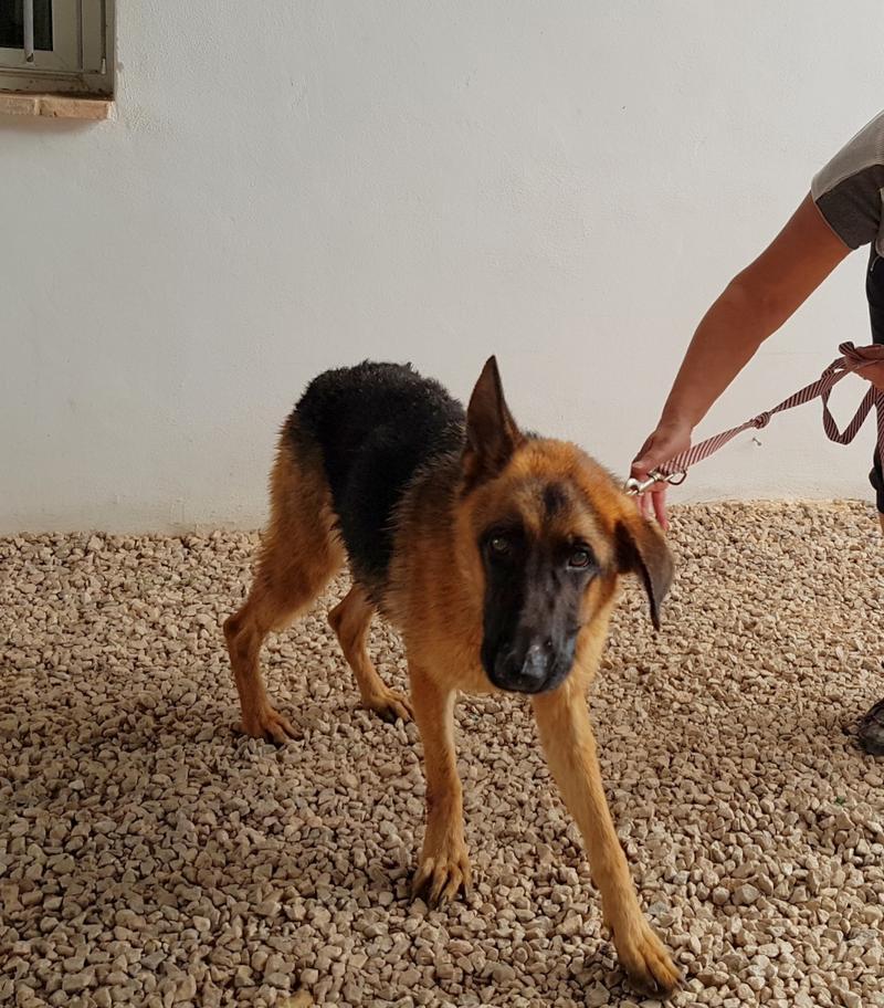 Bildertagebuch- Flopsy, eine ganz liebe sensible Hundedame die immer trauriger wurde und abmagerte, sie hatte sich aufgegeben ... VERMITTELT! 30752612ey