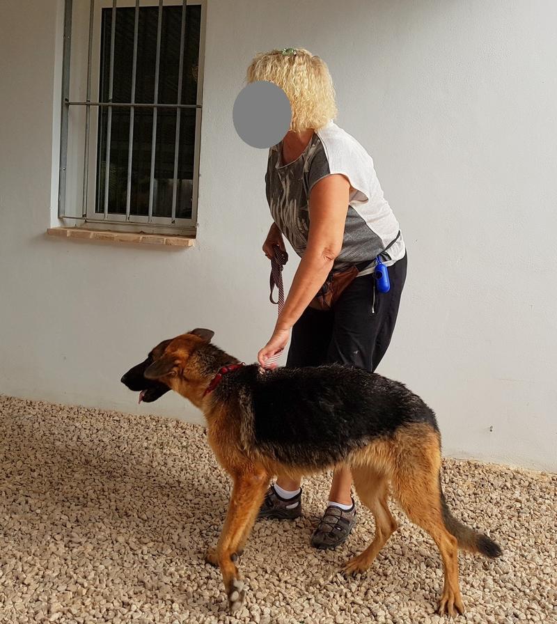 Bildertagebuch- Flopsy, eine ganz liebe sensible Hundedame die immer trauriger wurde und abmagerte, sie hatte sich aufgegeben ... VERMITTELT! 30752614fs