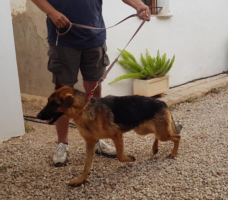 Bildertagebuch- Flopsy, eine ganz liebe sensible Hundedame die immer trauriger wurde und abmagerte, sie hatte sich aufgegeben ... VERMITTELT! 30752634yb