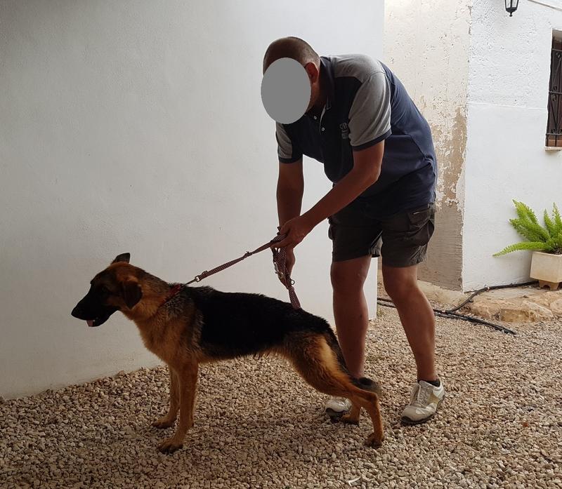 Bildertagebuch- Flopsy, eine ganz liebe sensible Hundedame die immer trauriger wurde und abmagerte, sie hatte sich aufgegeben ... VERMITTELT! 30752635xr
