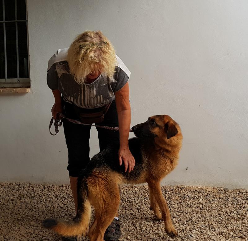 Bildertagebuch- Flopsy, eine ganz liebe sensible Hundedame die immer trauriger wurde und abmagerte, sie hatte sich aufgegeben ... VERMITTELT! 30752636bg