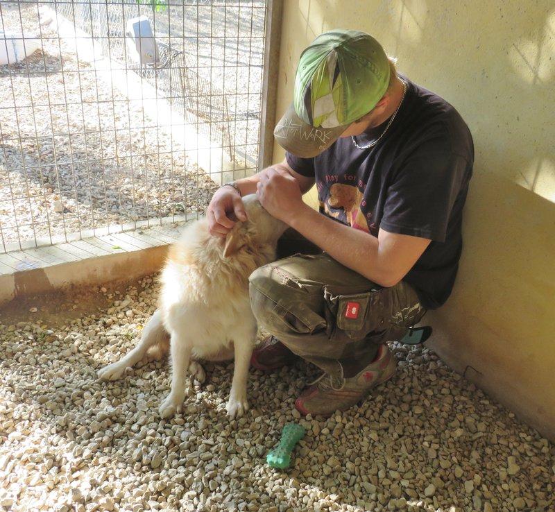 Bildertagebuch -  Bianco: grausam misshandelt sucht Hundeprofis denen er vertrauen kann - VERMITTELT - 30883036og