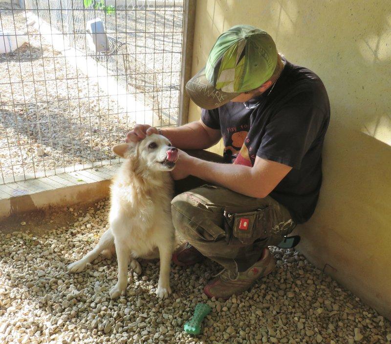 Bildertagebuch -  Bianco: grausam misshandelt sucht Hundeprofis denen er vertrauen kann - VERMITTELT - 30883037vr