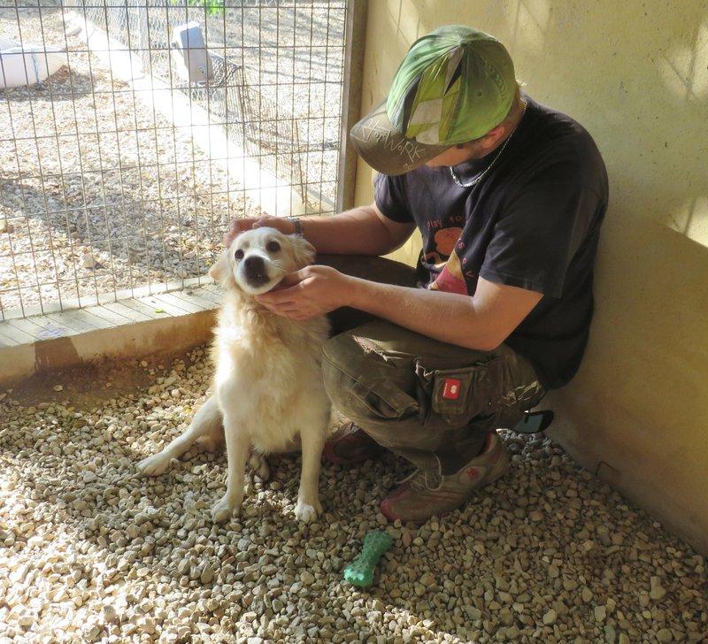 Bildertagebuch -  Bianco: grausam misshandelt sucht Hundeprofis denen er vertrauen kann - VERMITTELT - 30883038uh