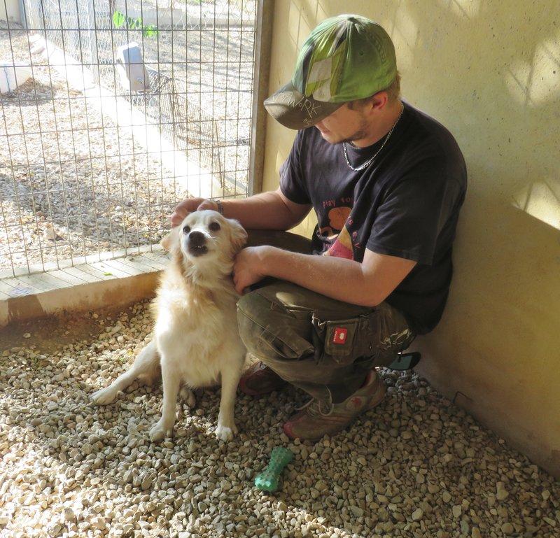 Bildertagebuch -  Bianco: grausam misshandelt sucht Hundeprofis denen er vertrauen kann - VERMITTELT - 30883039gt