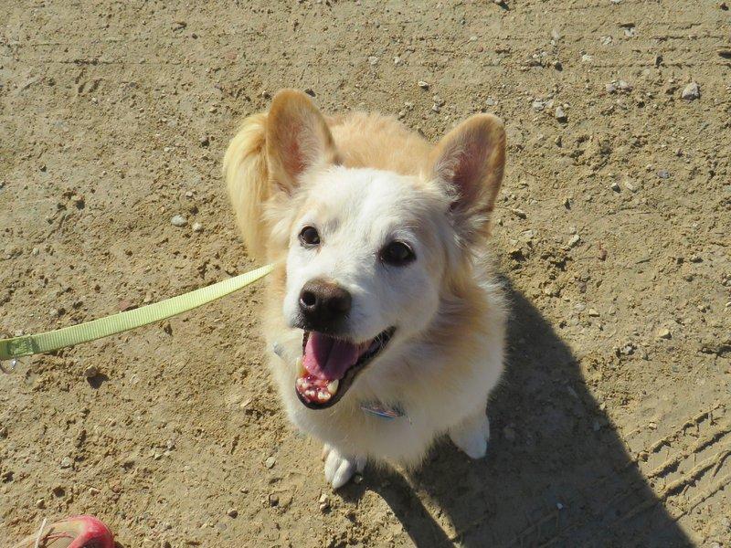 Bildertagebuch -  Bianco: grausam misshandelt sucht Hundeprofis denen er vertrauen kann - VERMITTELT - 30883058bi