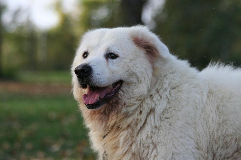 Bildertagebuch - Gaston, lieber weißer Bär der ein liebevolles Zuhause mit einem Garten sucht...RESERVIERT! 30899369js