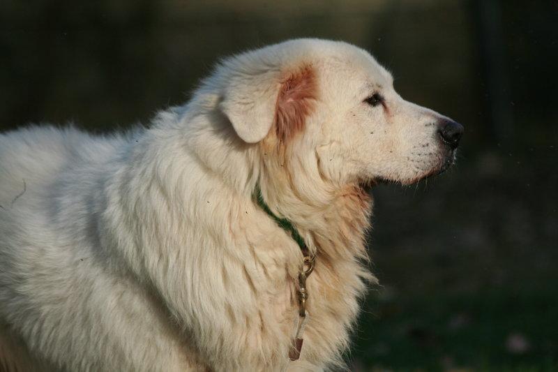 Bildertagebuch - Gaston, lieber weißer Bär der ein liebevolles Zuhause mit einem Garten sucht...RESERVIERT! 30899376nf