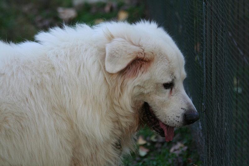 Bildertagebuch - Gaston, lieber weißer Bär der ein liebevolles Zuhause mit einem Garten sucht...RESERVIERT! 30899378lg