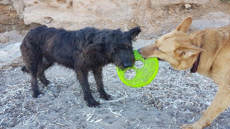 Bildertagebuch - Shrek, hübscher Terrier Mischling... -VERMITTELT! 30990233ah