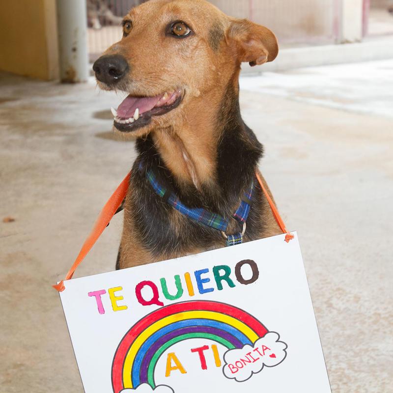 Bildertagebuch - Jarna, eine sehr hübsche Maus wartet seit über 5 Jahren auf ihre große Chance ...ZUHAUSE IN SPANIEN GEFUNDEN! 31028318jb