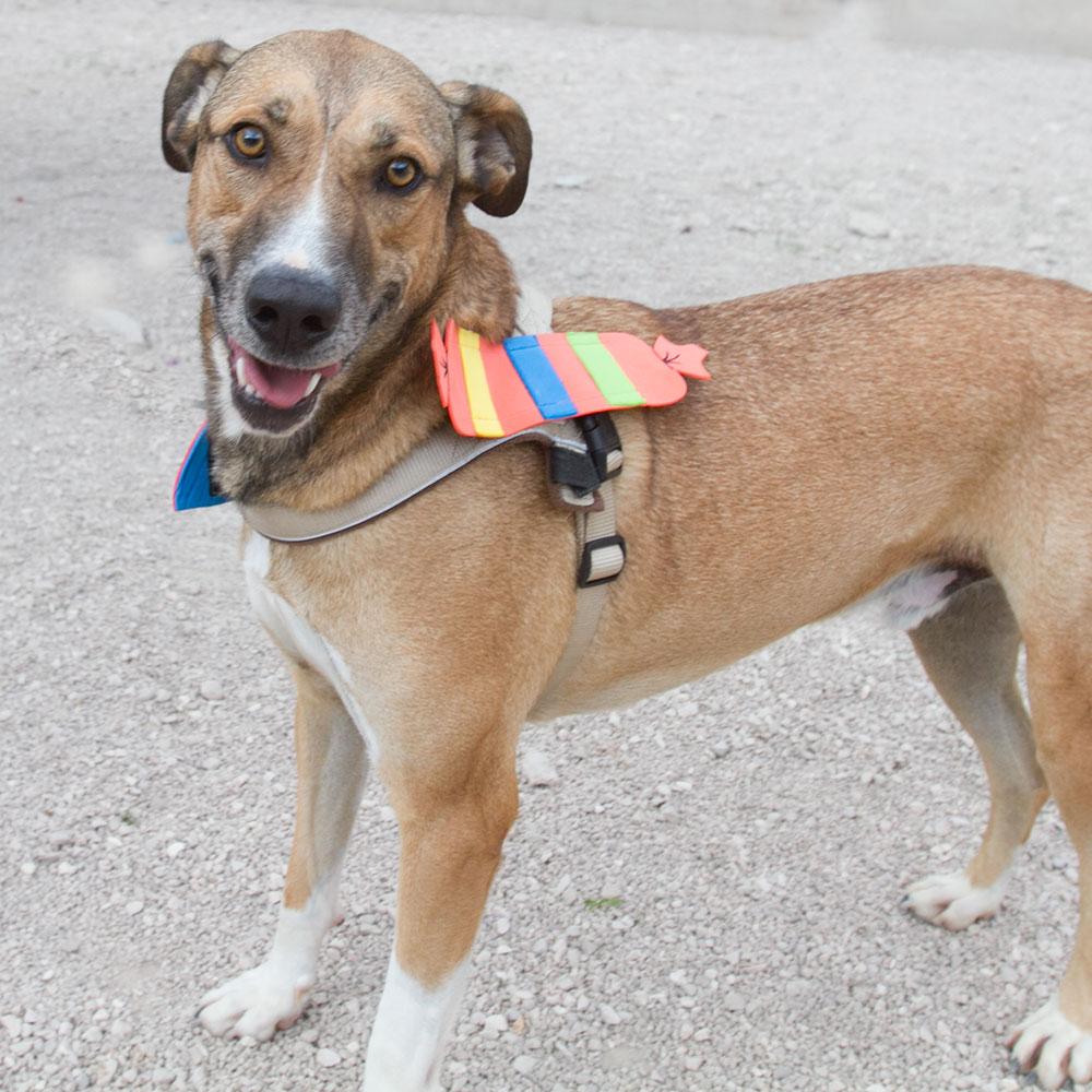 Bildertagebuch - Vago, ein junger lauffreudiger Hundekumpel der noch viel lernen möchte ...  31084582oy