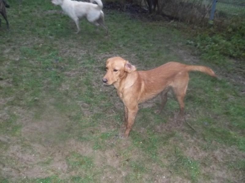 Bildertagebuch - AXEL, ein aufgewecktes Hundekind sucht ein Sofa... - VERMITTELT! 31141996lc
