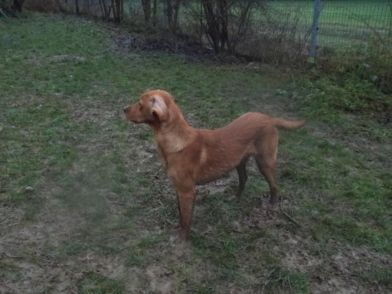 Bildertagebuch - AXEL, ein aufgewecktes Hundekind sucht ein Sofa... - VERMITTELT! 31141997zt