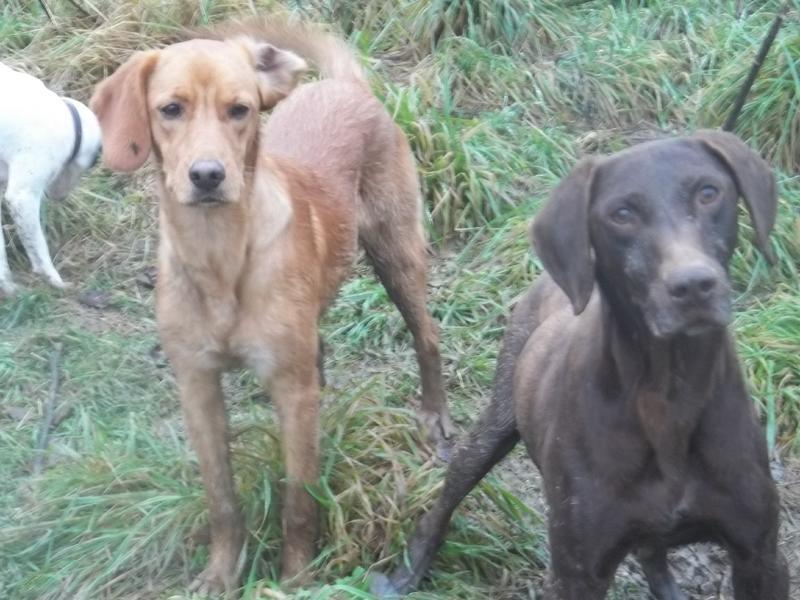 Bildertagebuch - AXEL, ein aufgewecktes Hundekind sucht ein Sofa... - VERMITTELT! 31141999ov
