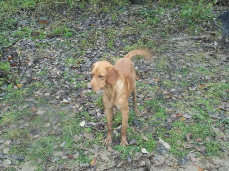 Bildertagebuch - AXEL, ein aufgewecktes Hundekind sucht ein Sofa... - VERMITTELT! 31142000dm