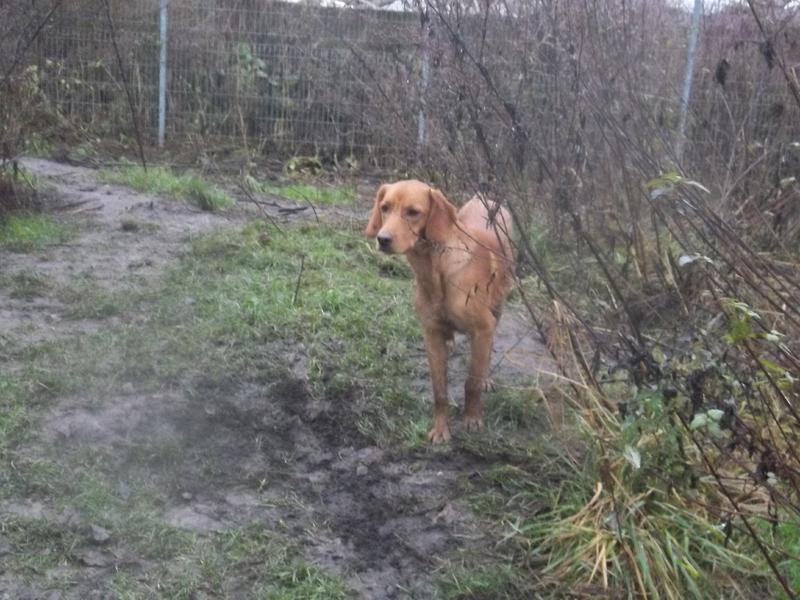 Bildertagebuch - AXEL, ein aufgewecktes Hundekind sucht ein Sofa... - VERMITTELT! 31142001uo