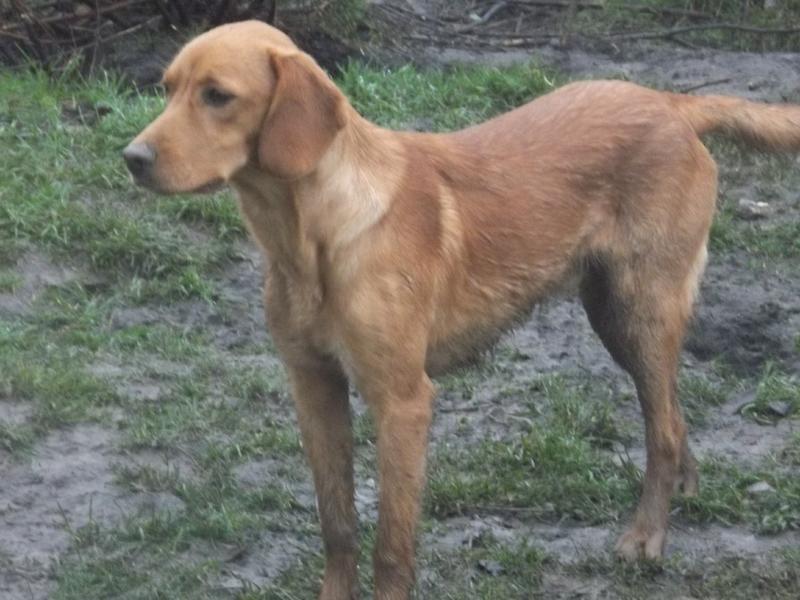 Bildertagebuch - AXEL, ein aufgewecktes Hundekind sucht ein Sofa... - VERMITTELT! 31142002os