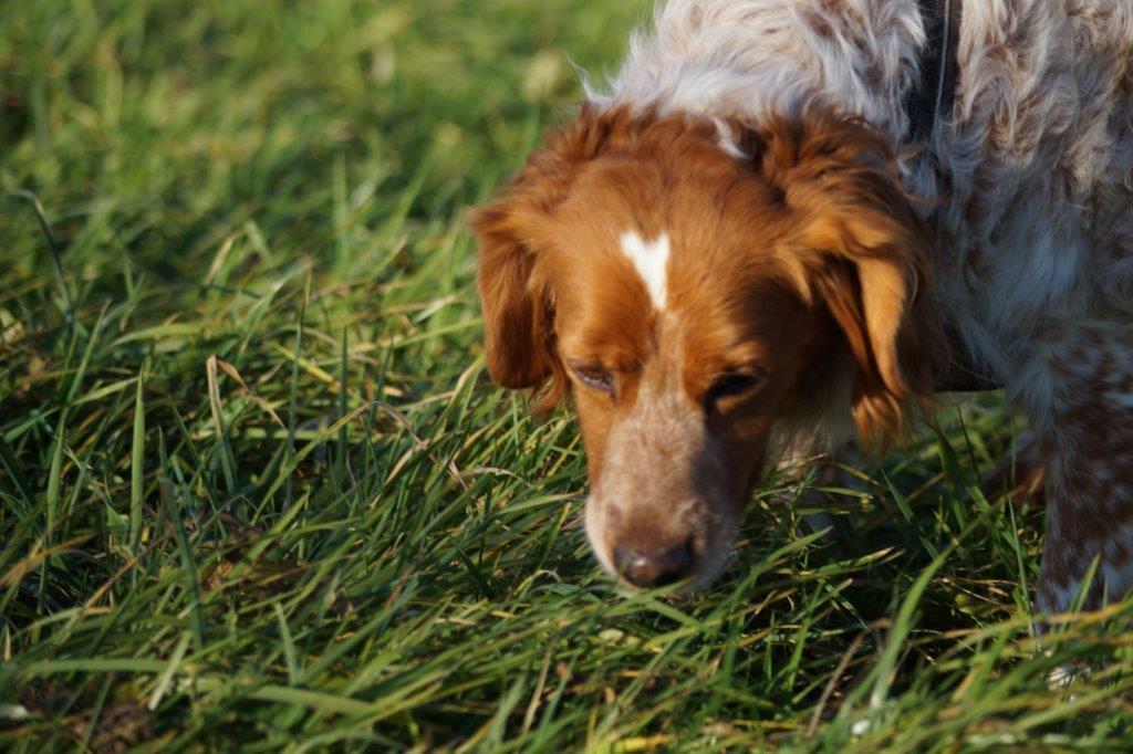 Bildertagebuch - Figo: ein SUPER- Familienhund - VERMITTELT! 31144082ci