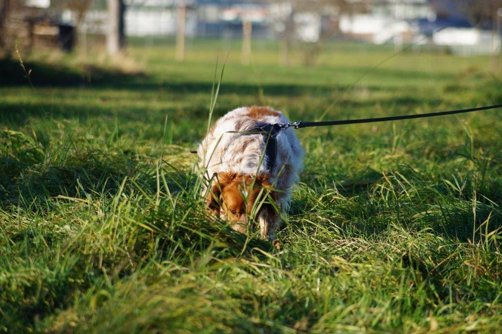 Bildertagebuch - Figo: ein SUPER- Familienhund - VERMITTELT! 31144086ob