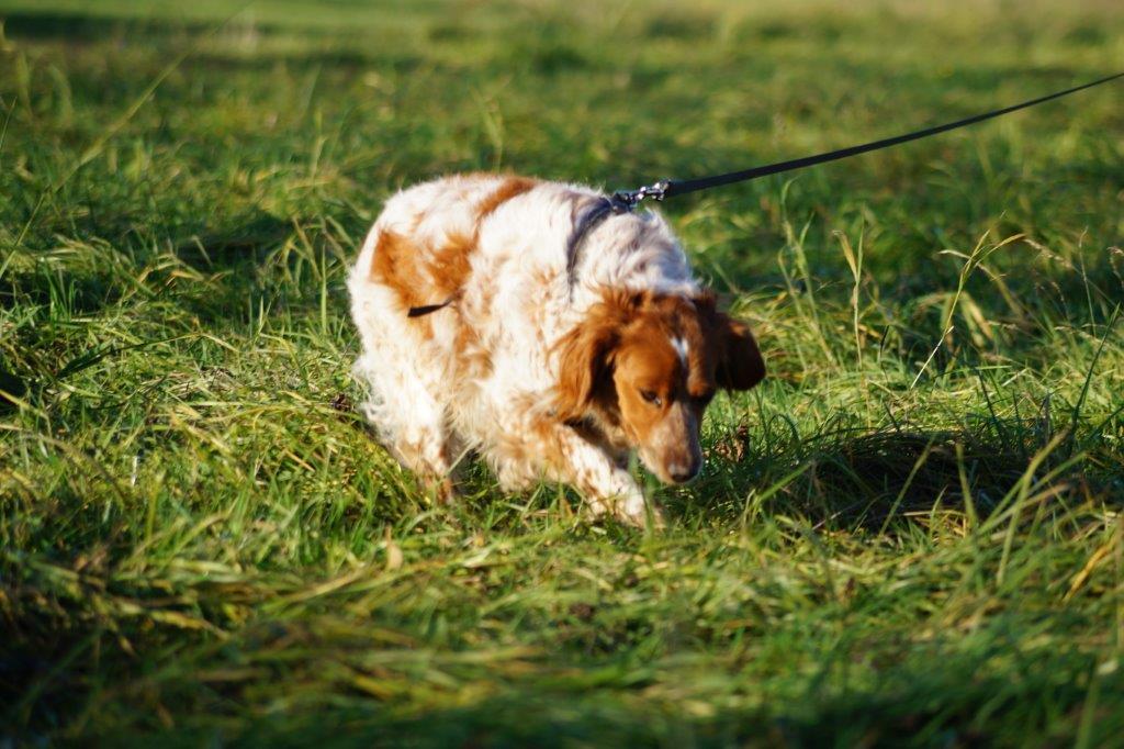 Bildertagebuch - Figo: ein SUPER- Familienhund - VERMITTELT! 31144087im