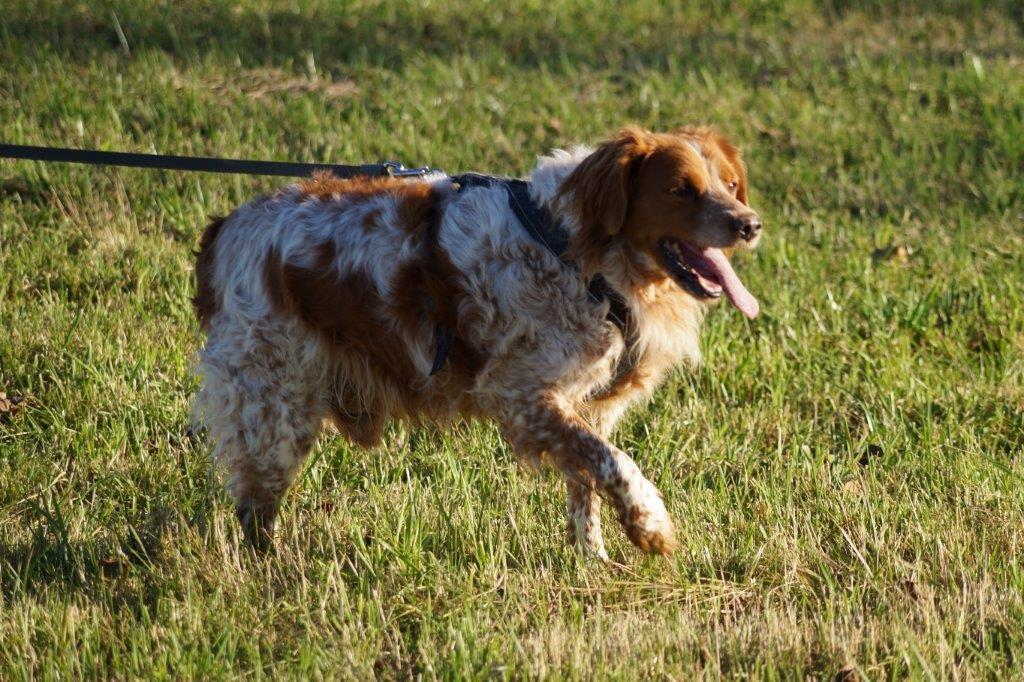 Bildertagebuch - Figo: ein SUPER- Familienhund - VERMITTELT! 31144091ib