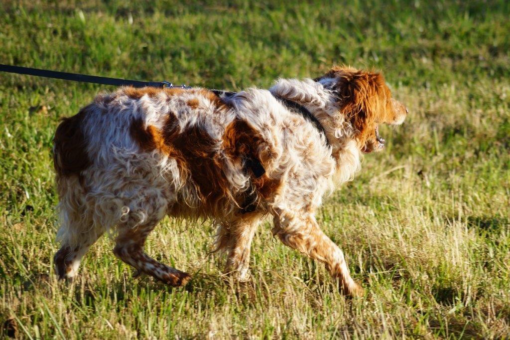 Bildertagebuch - Figo: ein SUPER- Familienhund - VERMITTELT! 31144092yp