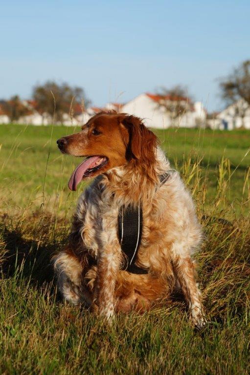 Bildertagebuch - Figo: ein SUPER- Familienhund - VERMITTELT! 31144094hq