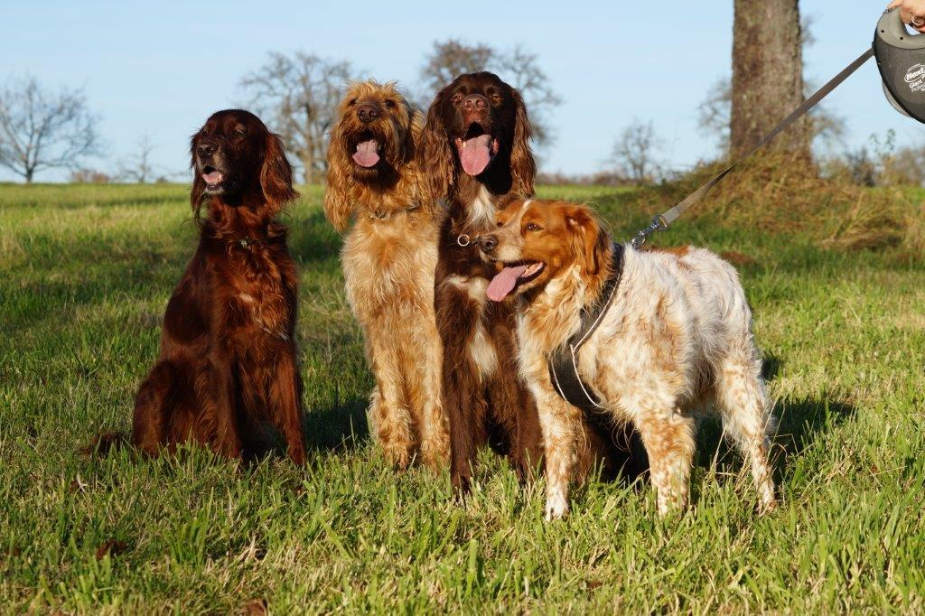 Bildertagebuch - Figo: ein SUPER- Familienhund - VERMITTELT! 31144097mo