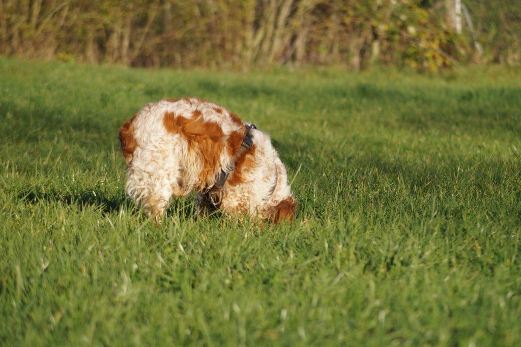 Bildertagebuch - Figo: ein SUPER- Familienhund - VERMITTELT! 31144099hb