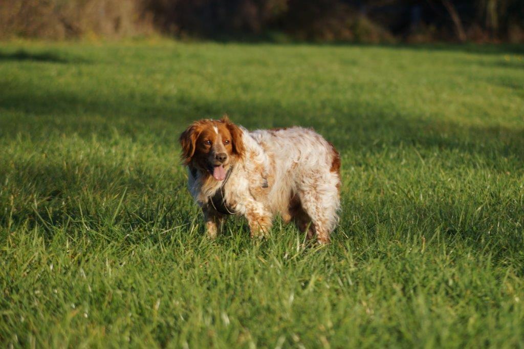 Bildertagebuch - Figo: ein SUPER- Familienhund - VERMITTELT! 31144100dm