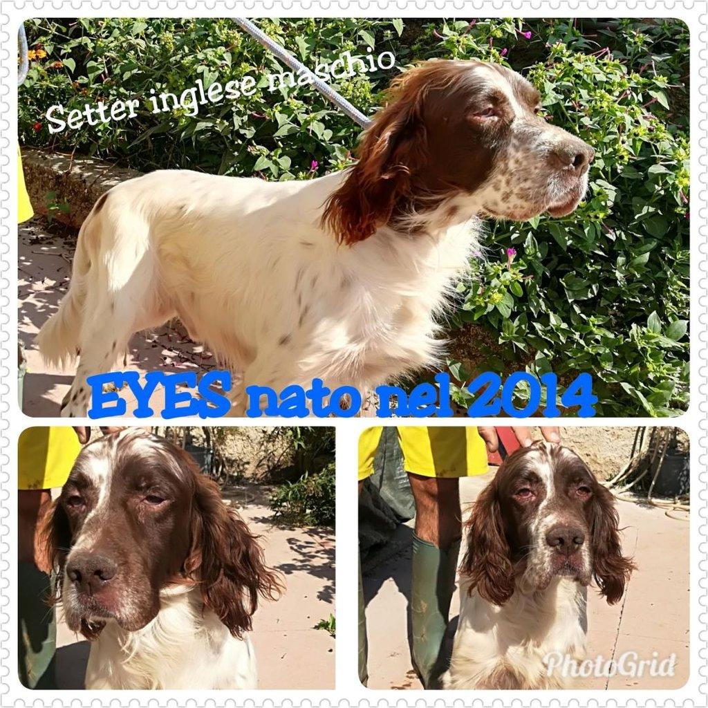 Bildertagebuch - Eyes, so jung und schon mit Handicap...ein Trauma nahm ihm sein Augenlicht - VERMITTELT - 31297860oa