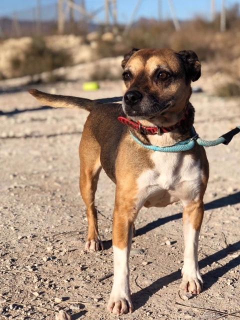 Bildertagebuch -  Ivy (jetzt Maja): eine kleine Hundelady hofft - VERMITTELT! 31333420dr