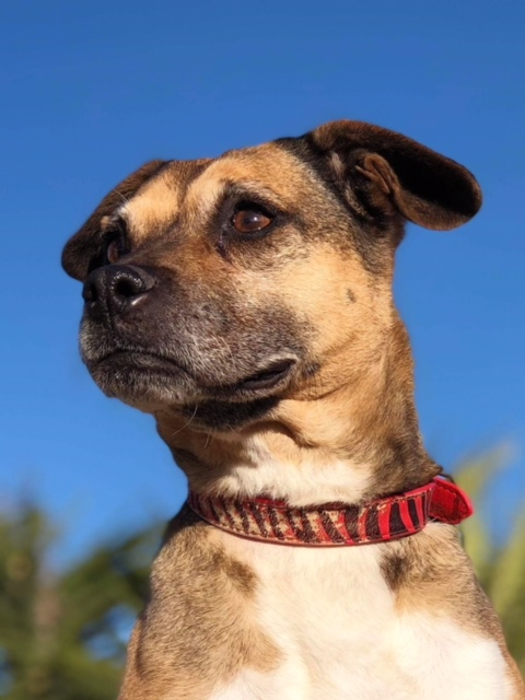 Bildertagebuch -  Ivy (jetzt Maja): eine kleine Hundelady hofft - VERMITTELT! 31333423rl