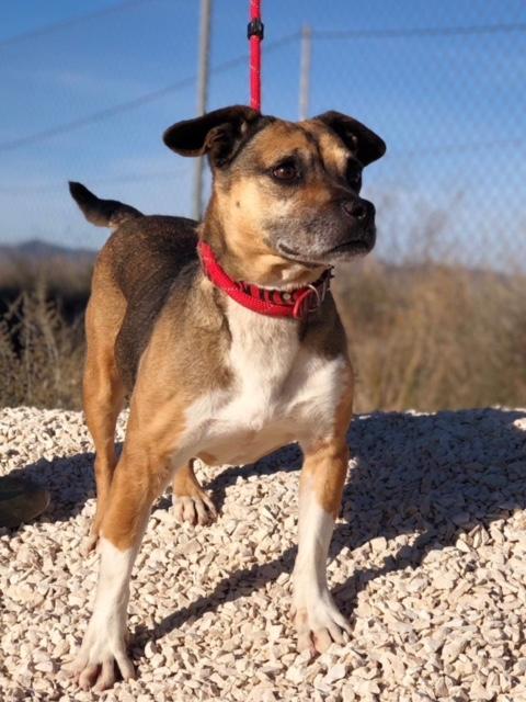 Bildertagebuch -  Ivy (jetzt Maja): eine kleine Hundelady hofft - VERMITTELT! 31333433qn