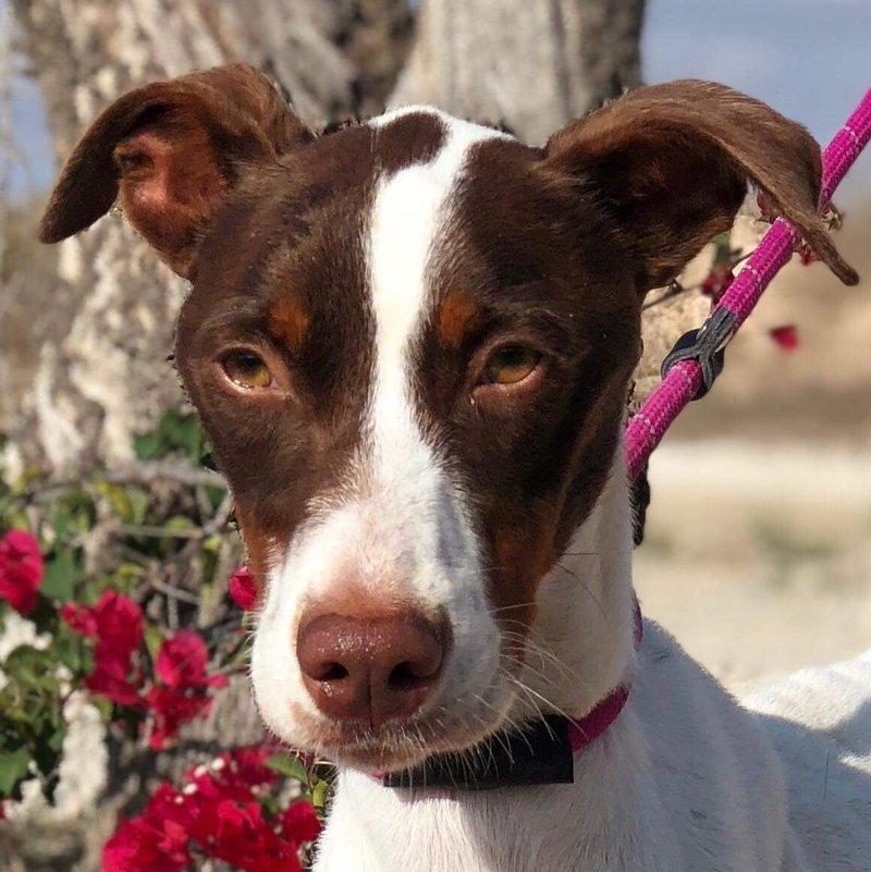 Bildertagebuch  - Kylo: ein bildschöner, eleganter, und cleverer Hund für aktive Menschen! - VERMITTELT- 31341169op