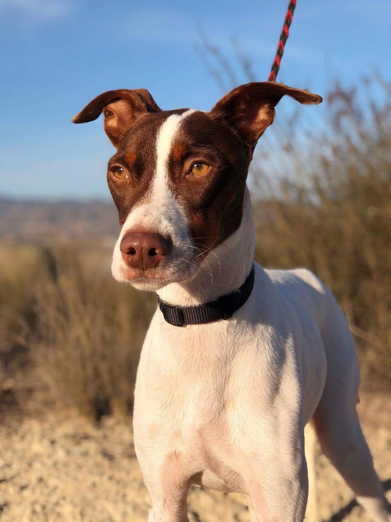 Bildertagebuch  - Kylo: ein bildschöner, eleganter, und cleverer Hund für aktive Menschen! - VERMITTELT- 31341170sc