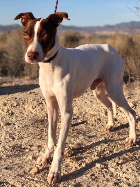 Bildertagebuch  - Kylo: ein bildschöner, eleganter, und cleverer Hund für aktive Menschen! - VERMITTELT- 31341171vl