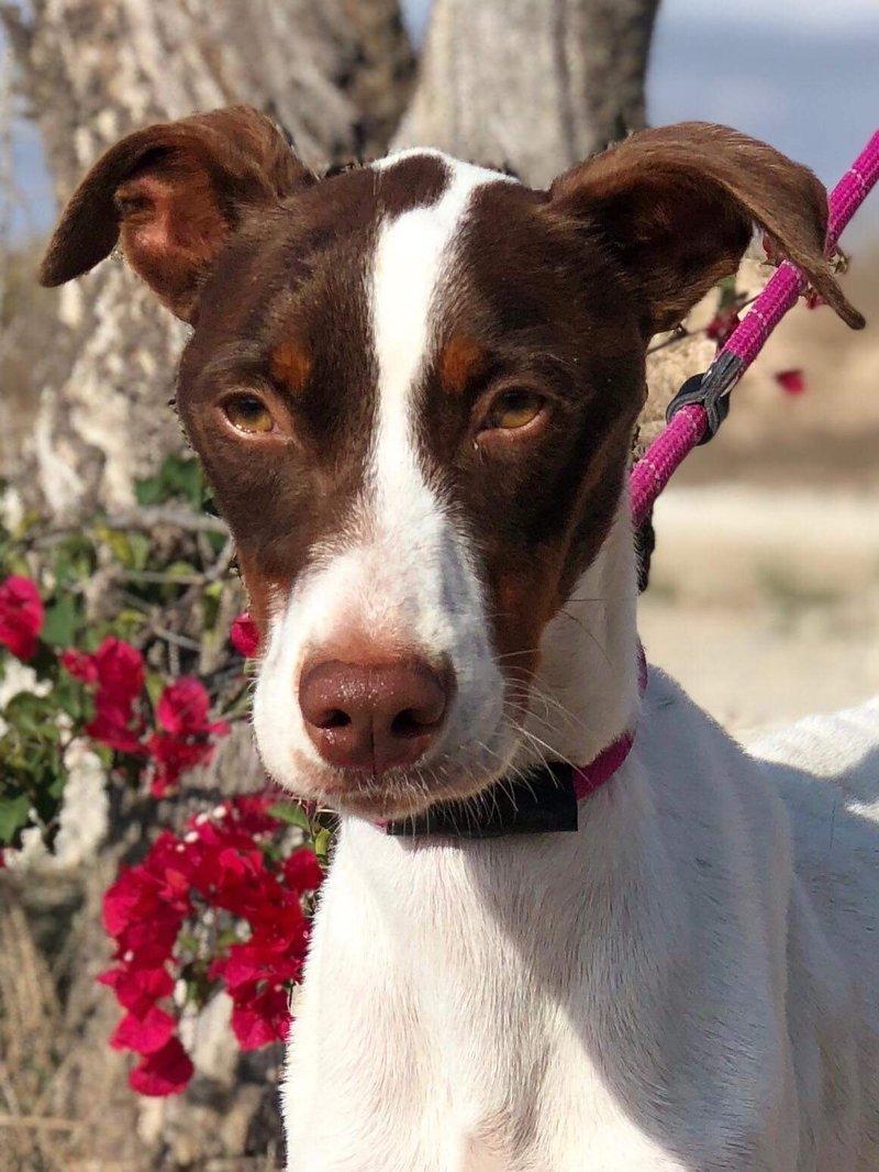 Bildertagebuch  - Kylo: ein bildschöner, eleganter, und cleverer Hund für aktive Menschen! - VERMITTELT- 31341175po