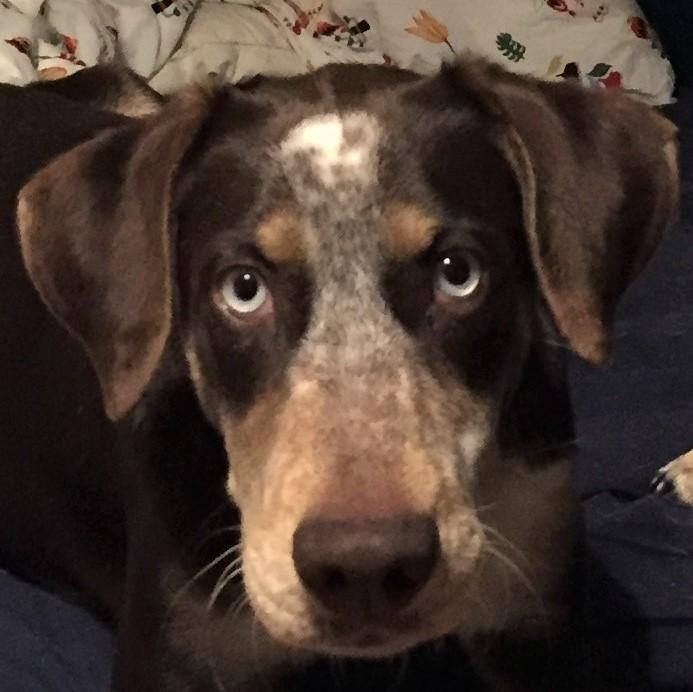 Bildertagebuch- Azul, nette sensible Hundedame mit wunderschönen blitzblauen Augen wünscht sich sehr eine Familie... - VERMITTELT! 31341417zt