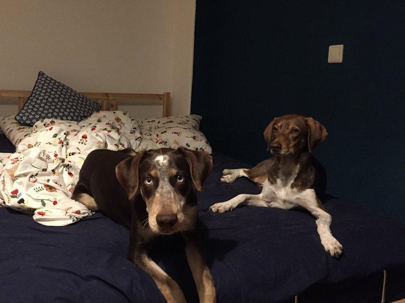 Bildertagebuch- Azul, nette sensible Hundedame mit wunderschönen blitzblauen Augen wünscht sich sehr eine Familie... - VERMITTELT! 31341423re