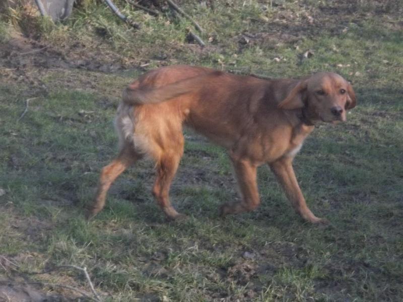 Bildertagebuch - AXEL, ein aufgewecktes Hundekind sucht ein Sofa... - VERMITTELT! 31399937uh