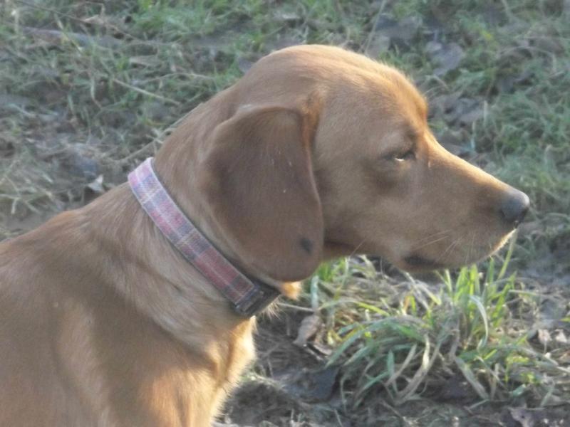 Bildertagebuch - AXEL, ein aufgewecktes Hundekind sucht ein Sofa... - VERMITTELT! 31399938sw