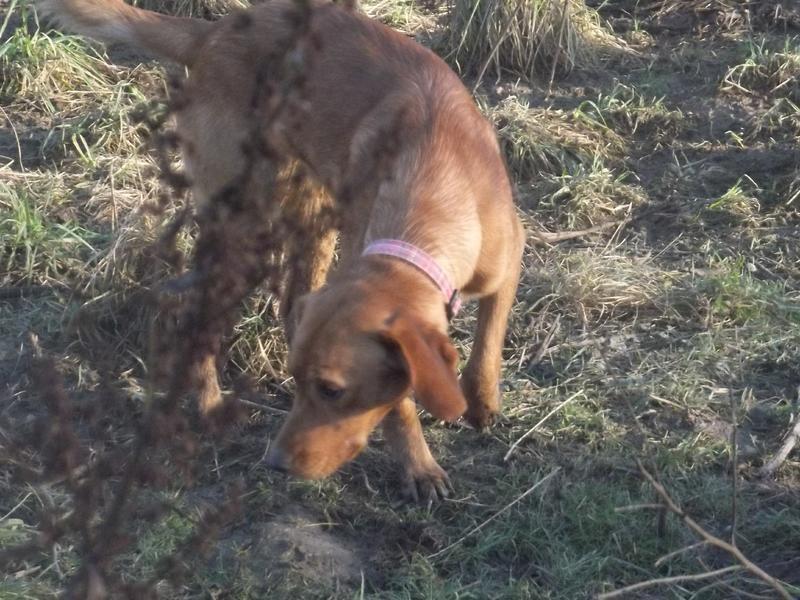 Bildertagebuch - AXEL, ein aufgewecktes Hundekind sucht ein Sofa... - VERMITTELT! 31399939sh