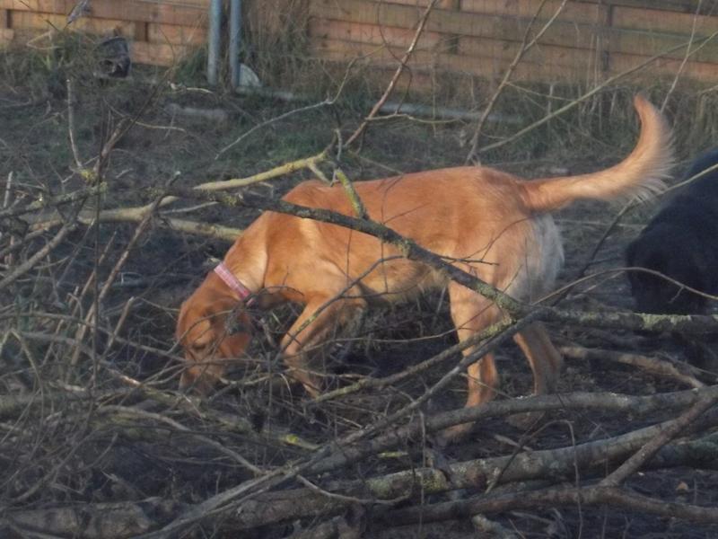 Bildertagebuch - AXEL, ein aufgewecktes Hundekind sucht ein Sofa... - VERMITTELT! 31399940db